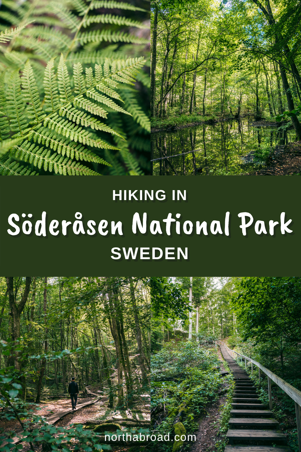 Hiking in Söderåsen National Park in Scania, Sweden