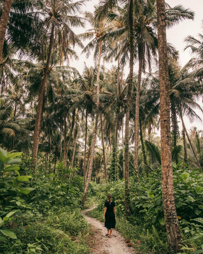 Jungle path around the island
