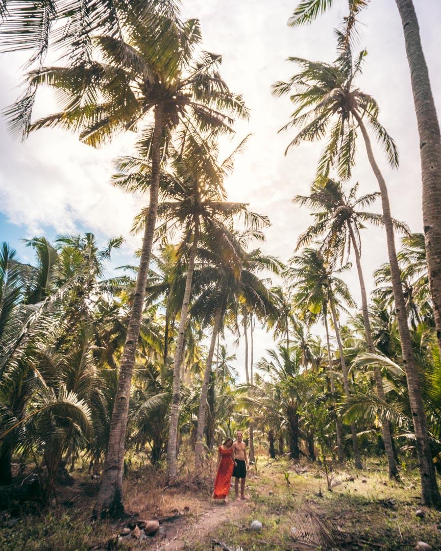 Nusa Penida palms