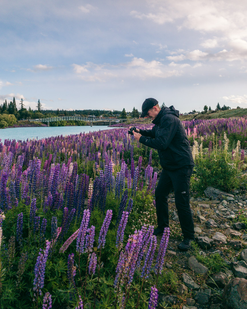 Man shooting the lupin bloom in New Zealand
