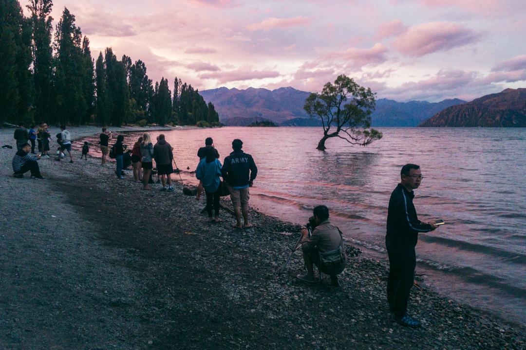 Wanaka tree and photographers