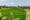 Rice fields in Canggu