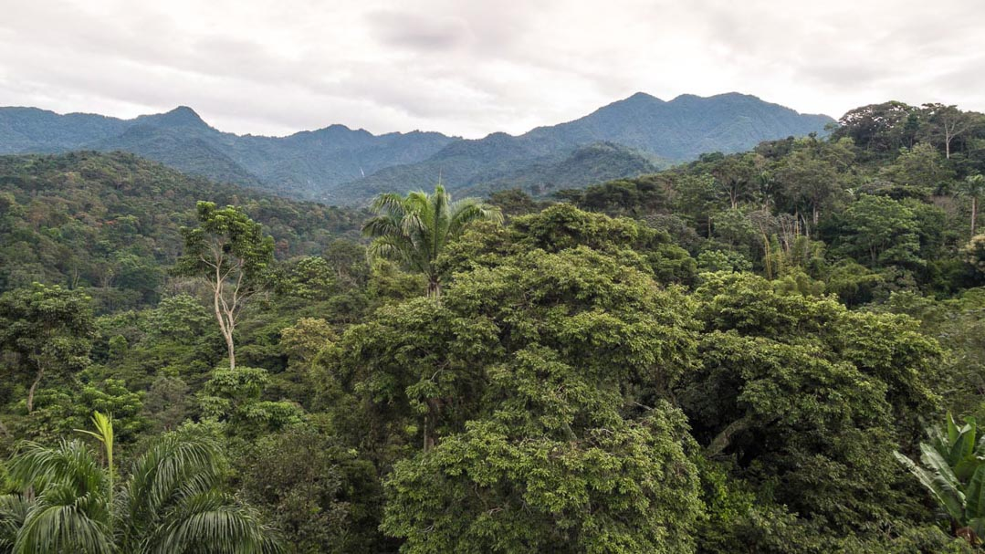 Jungle in Chiapas, Mexico