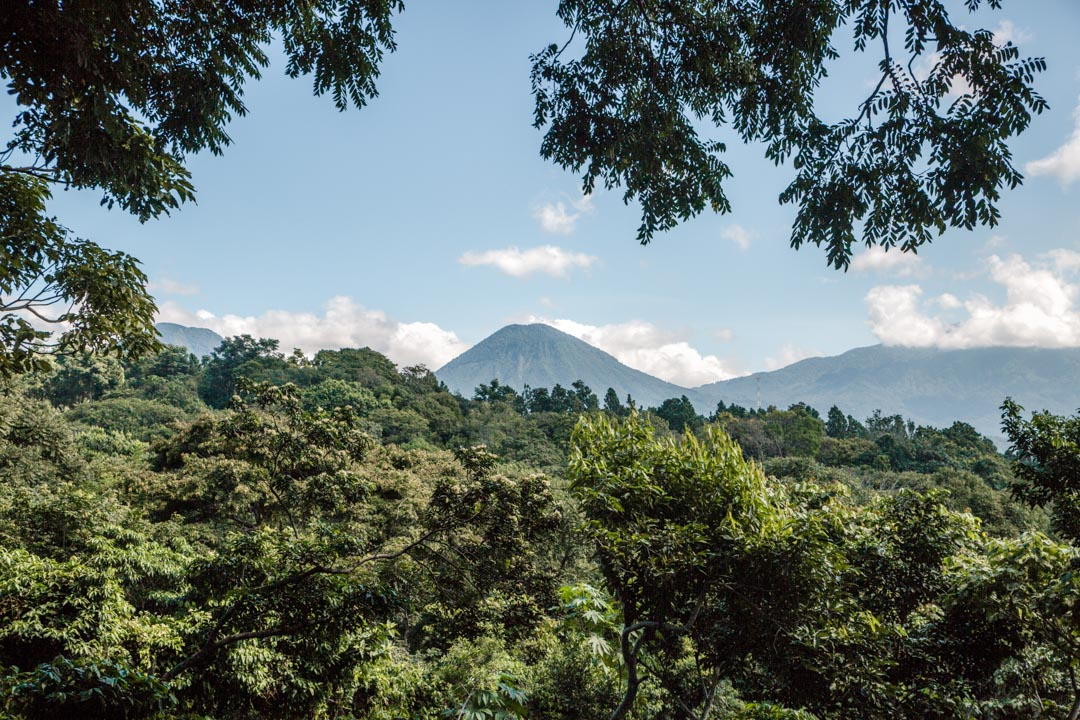 El Salvador jungle
