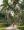 Back road in Rarotonga