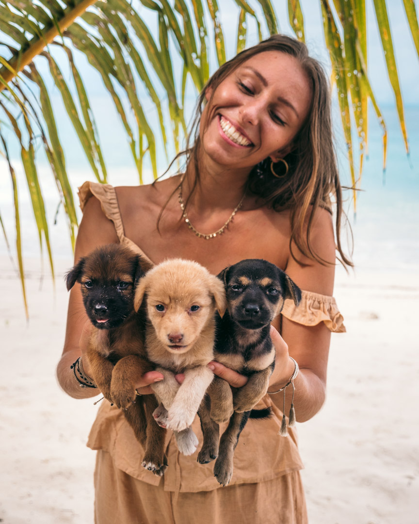 Playing with puppies on tropical beach