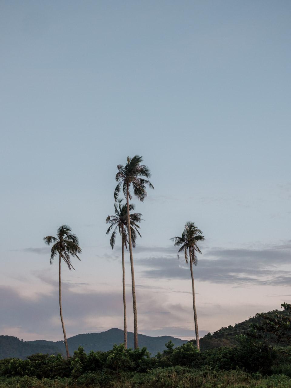 Palm trees on Nacpan Beach