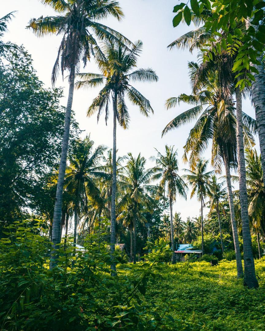 Palm trees on Gili Meno