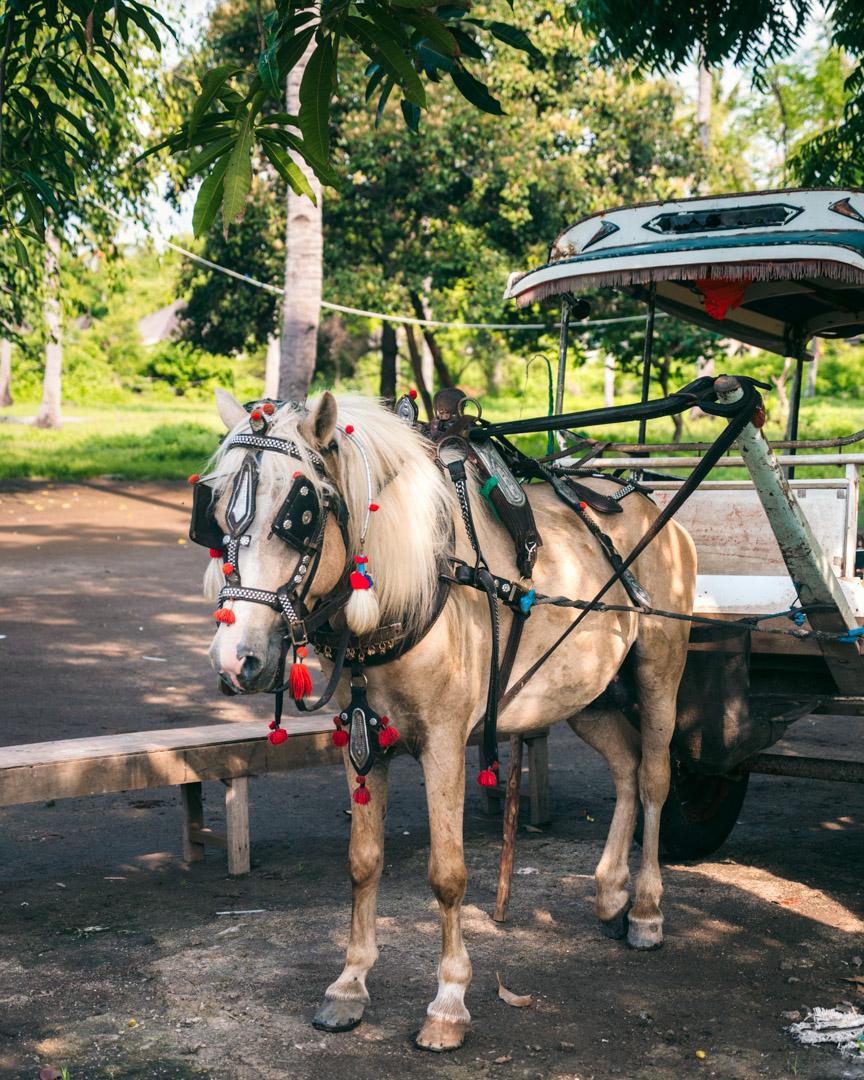 Horse carriage on Gili Meno