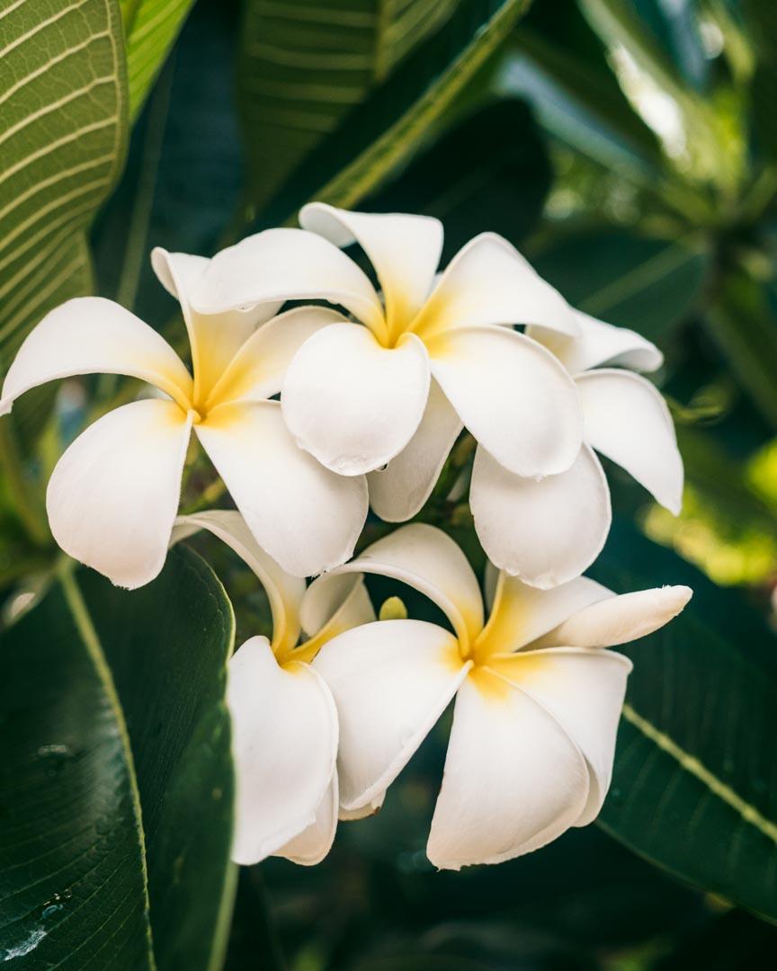 Flowers on Gili Meno