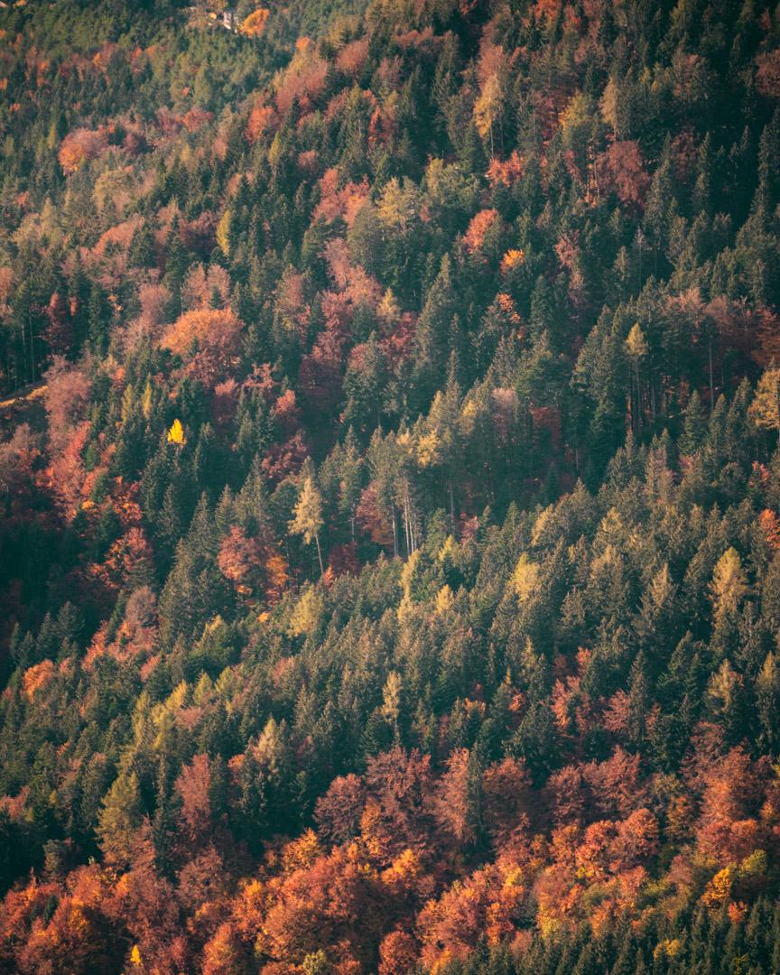 Innsbruck in autumn foliage