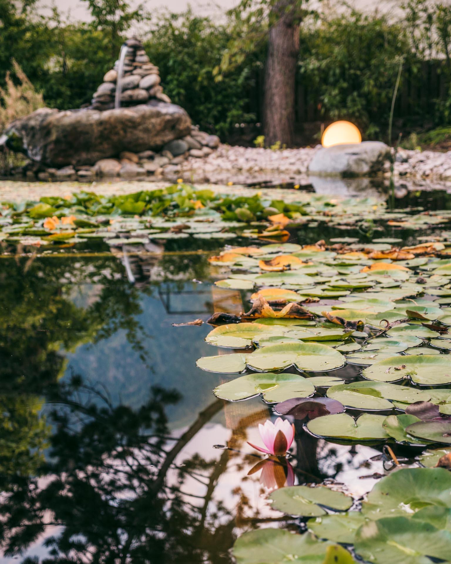 The pond