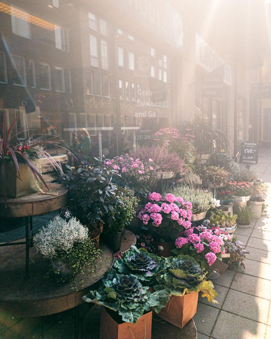 Lund flowers
