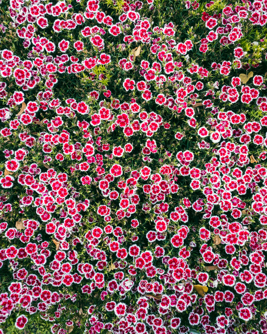 The Botanical Garden flowers