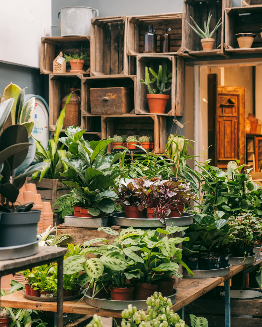 Plants in Malmö