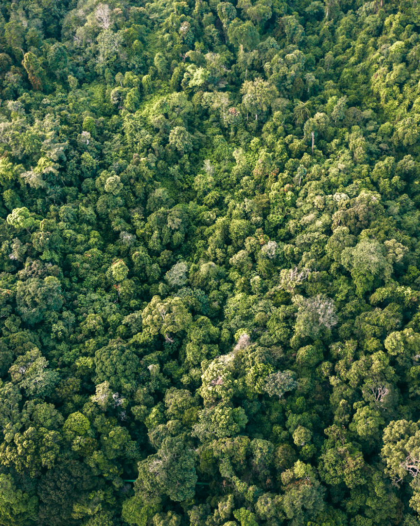 Gunung Leuser National Park from above showing the tree diversity