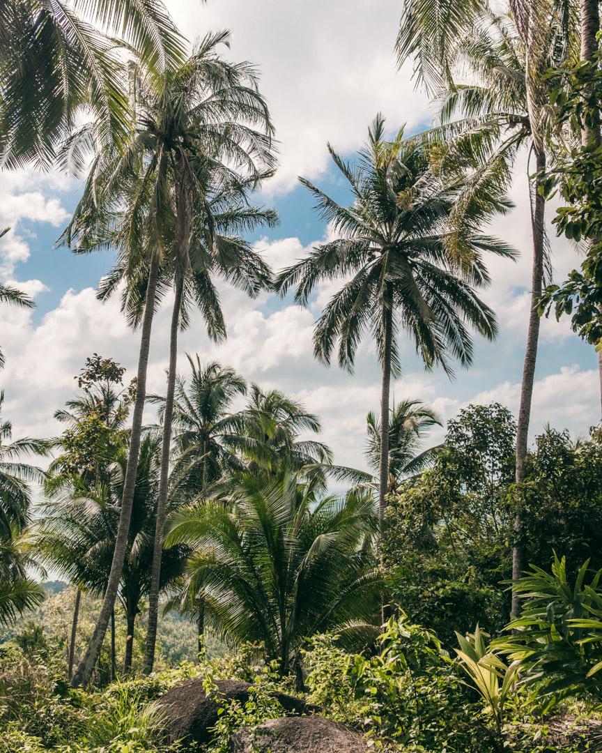 Palm trees near Overlap Stone