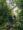 Bumdi forest