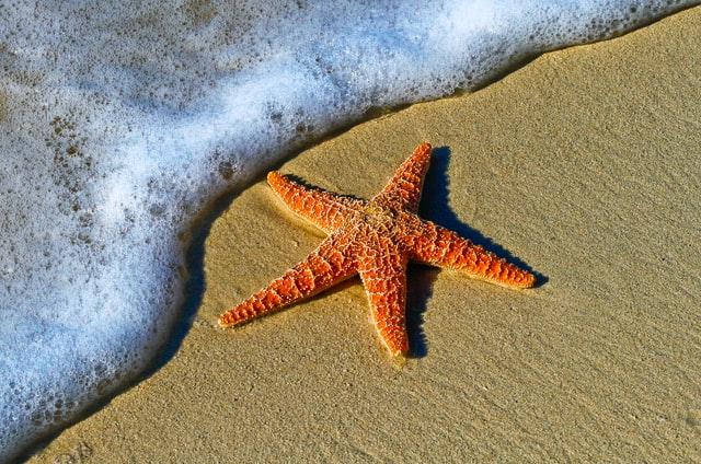 Starfish on beach, dangerous or not?