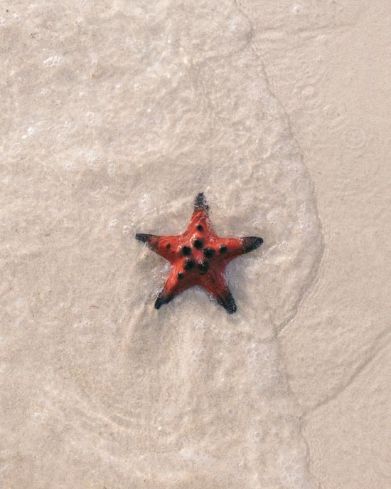 Starfish are living creatures and so pretty