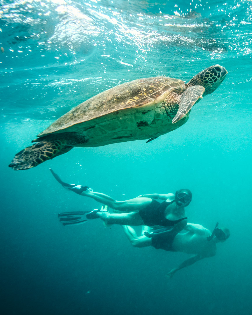 Alex and Victoria swimming with turtle
