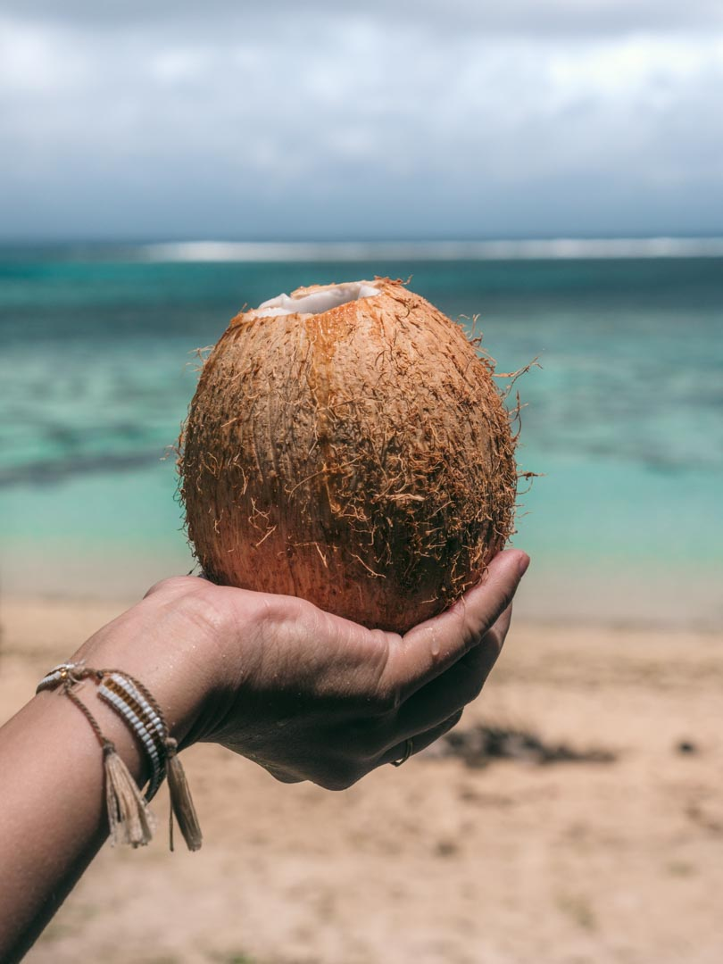 Coconut by the ocean in Rarotonga