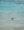 Baby sea turtle in the ocean