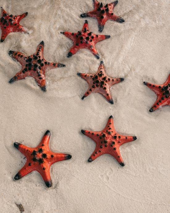 Starfish in Vietnam