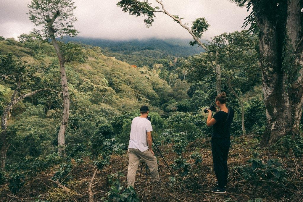Coffee trees in El Salvador