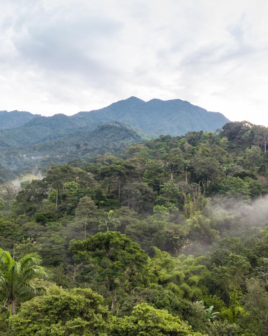 A coffee farm in Mexico with so much shade that you can barely tell it's a farm