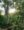 Jefferson Shriver's coffee farm in Nicaragua