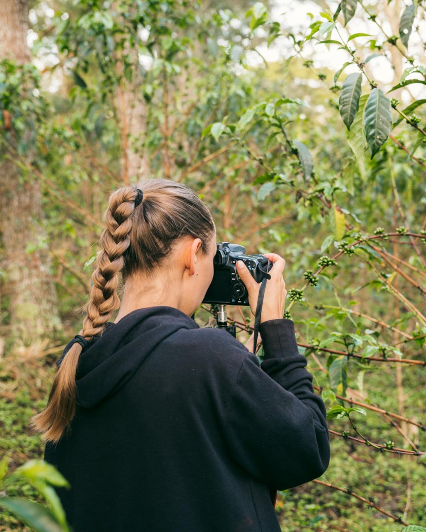 Victoria filming and photographing green coffee cherries on a coffee farm