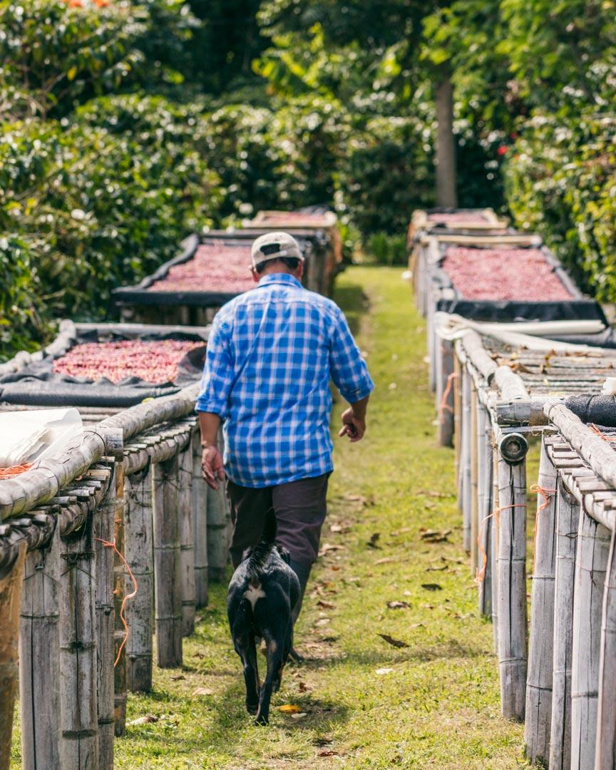 Richard's farm in Boquete