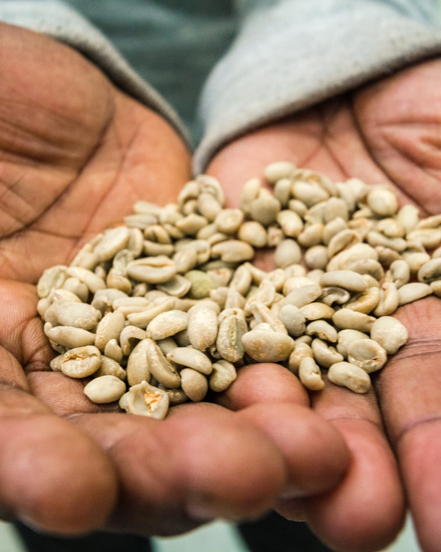 Shade Grown Coffee CPH:DOX