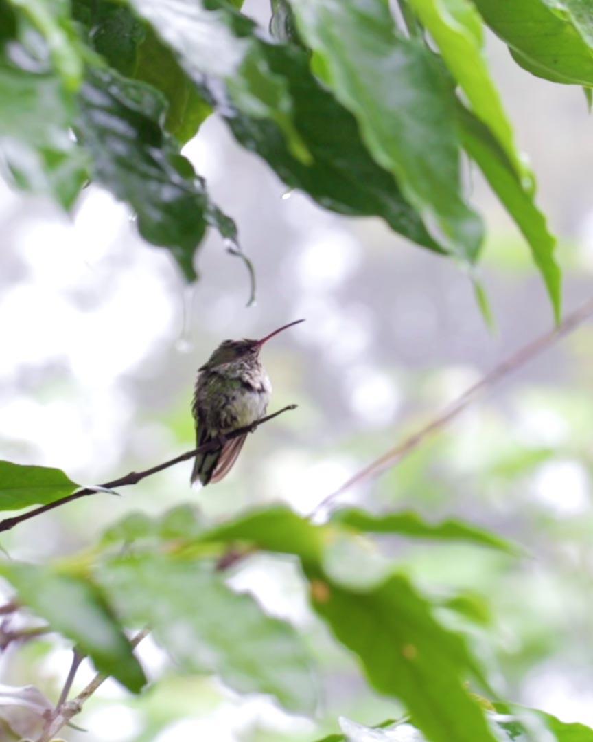 Bird in Jamaica