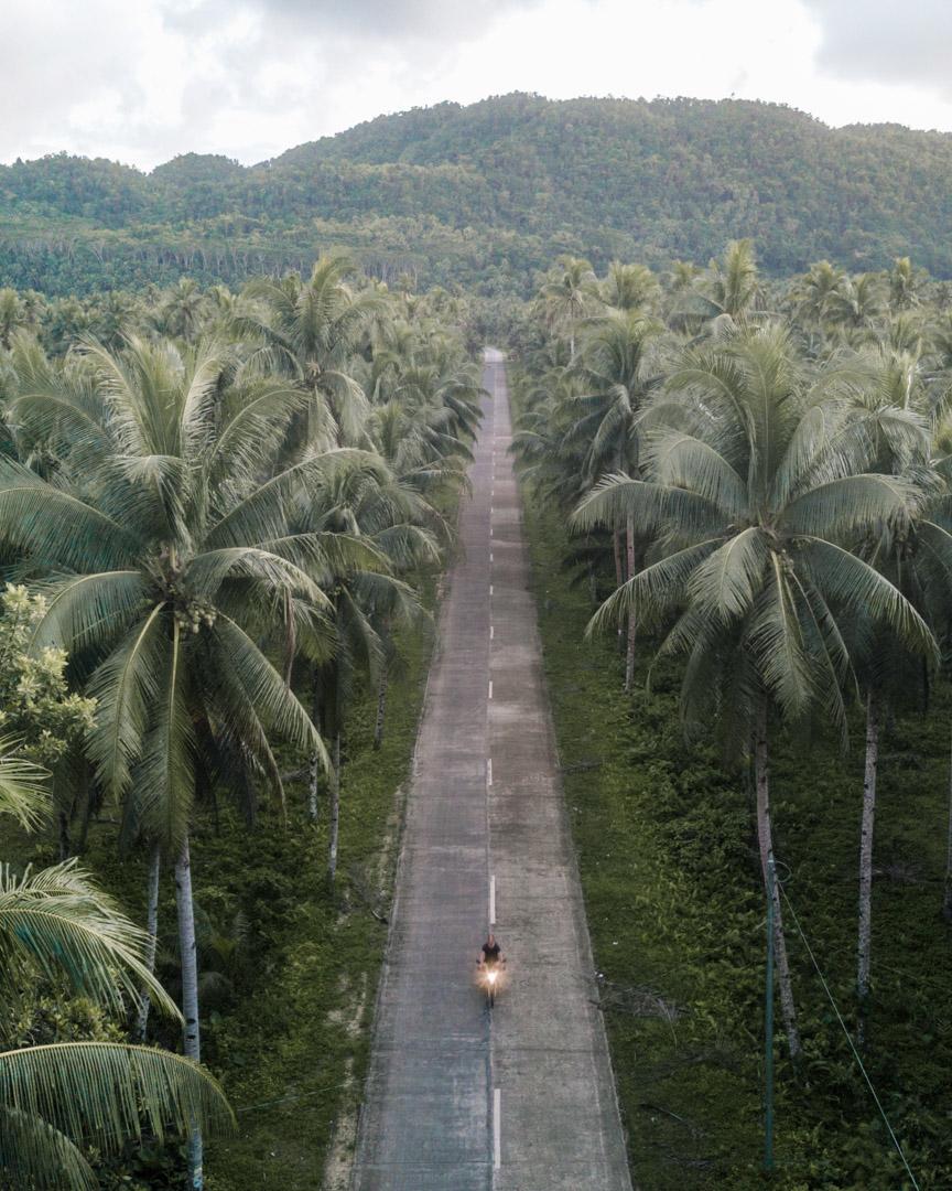 Palm tree road on Siargao motorbike
