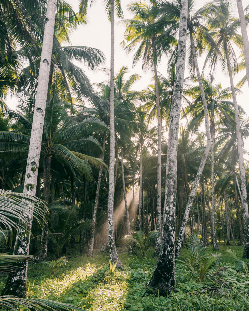 Palm trees on the way to Alegria Beach