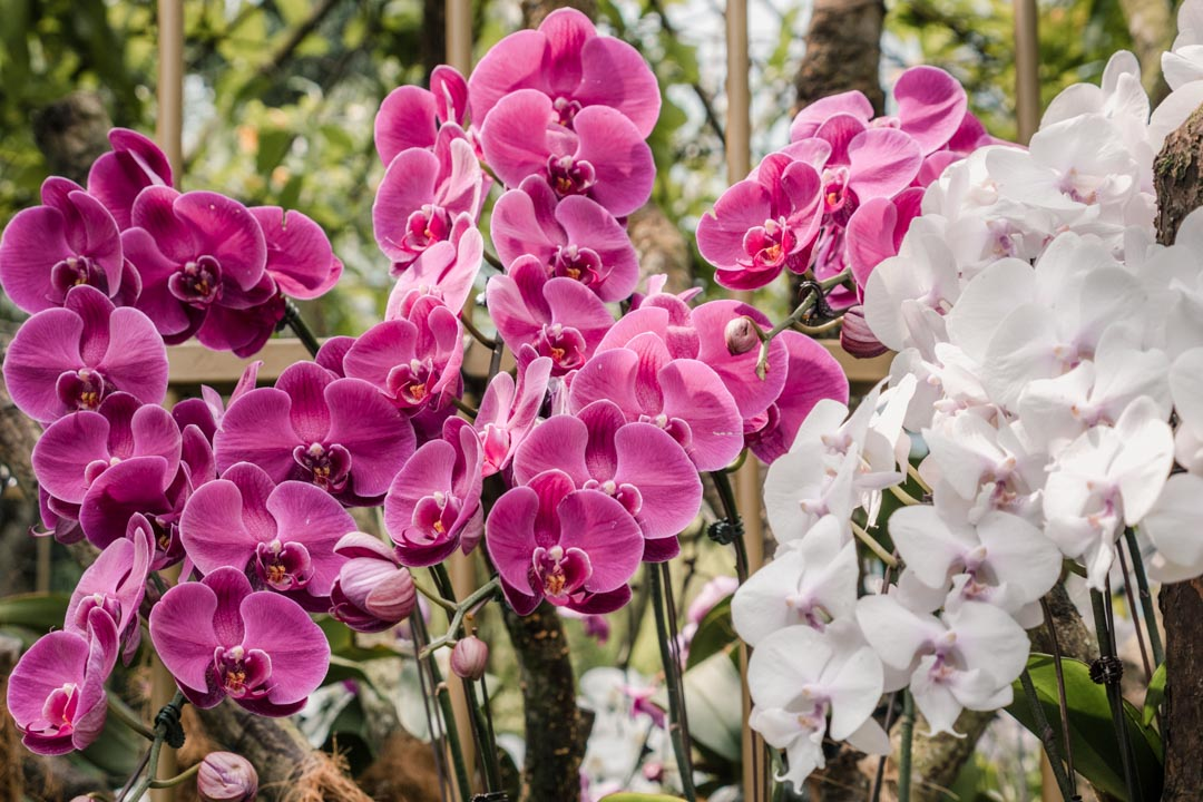 Close-up orchids