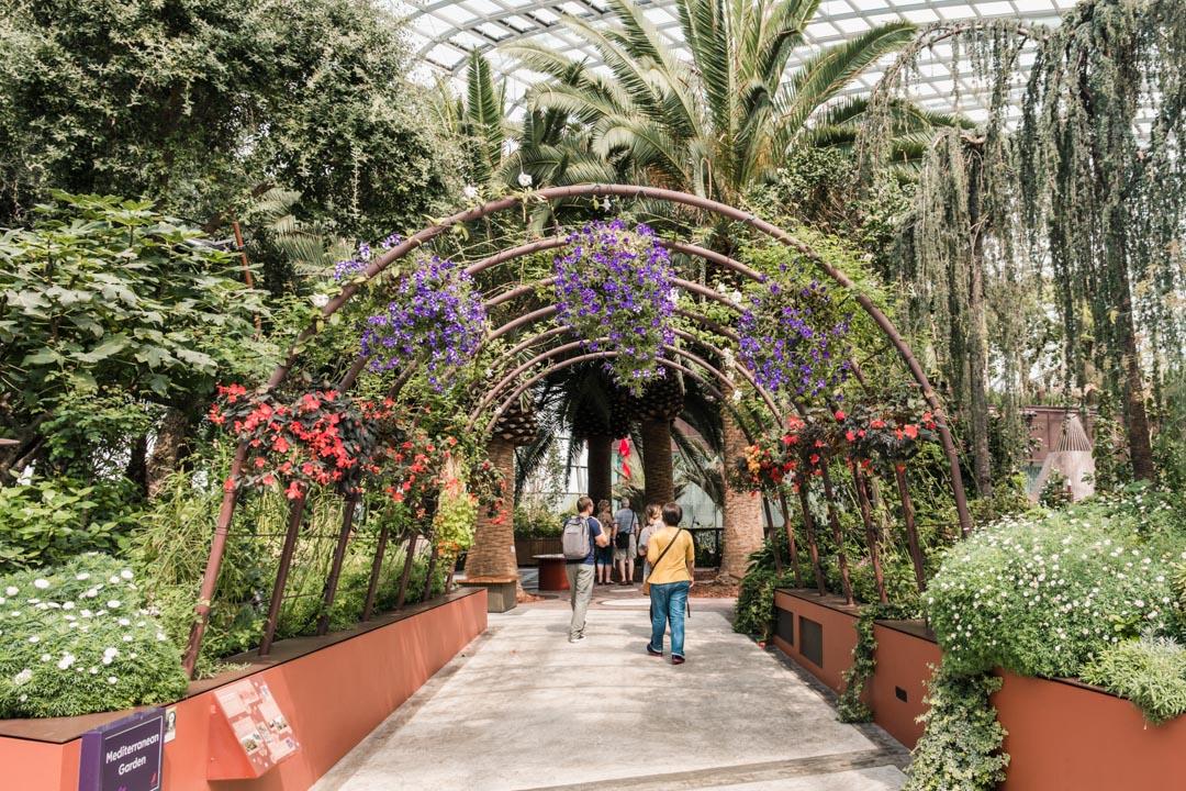 Mediterranean Sea in Flower Dome