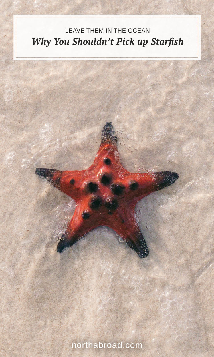 Why You Shouldn't Pick Up Starfish from the Beach