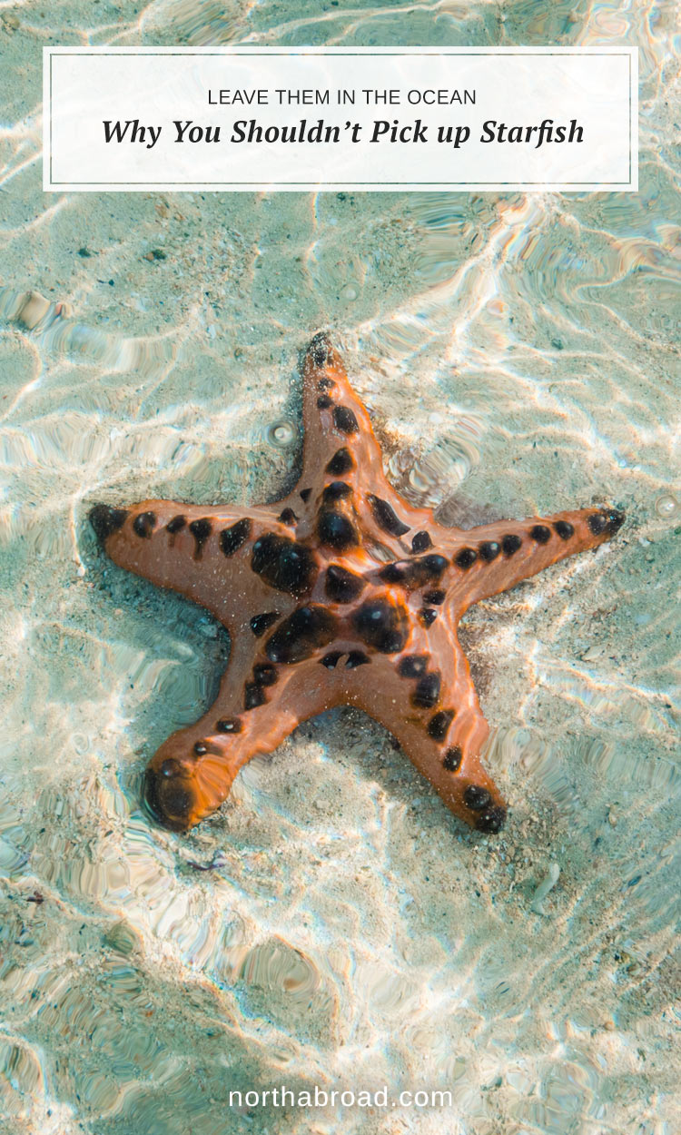 Why You Shouldn't Pick Up Starfish from the Beach. Even though starfish are beautiful and look great on a photo from your vacation, you should leave them in the ocean. In this artcle we tell you why.