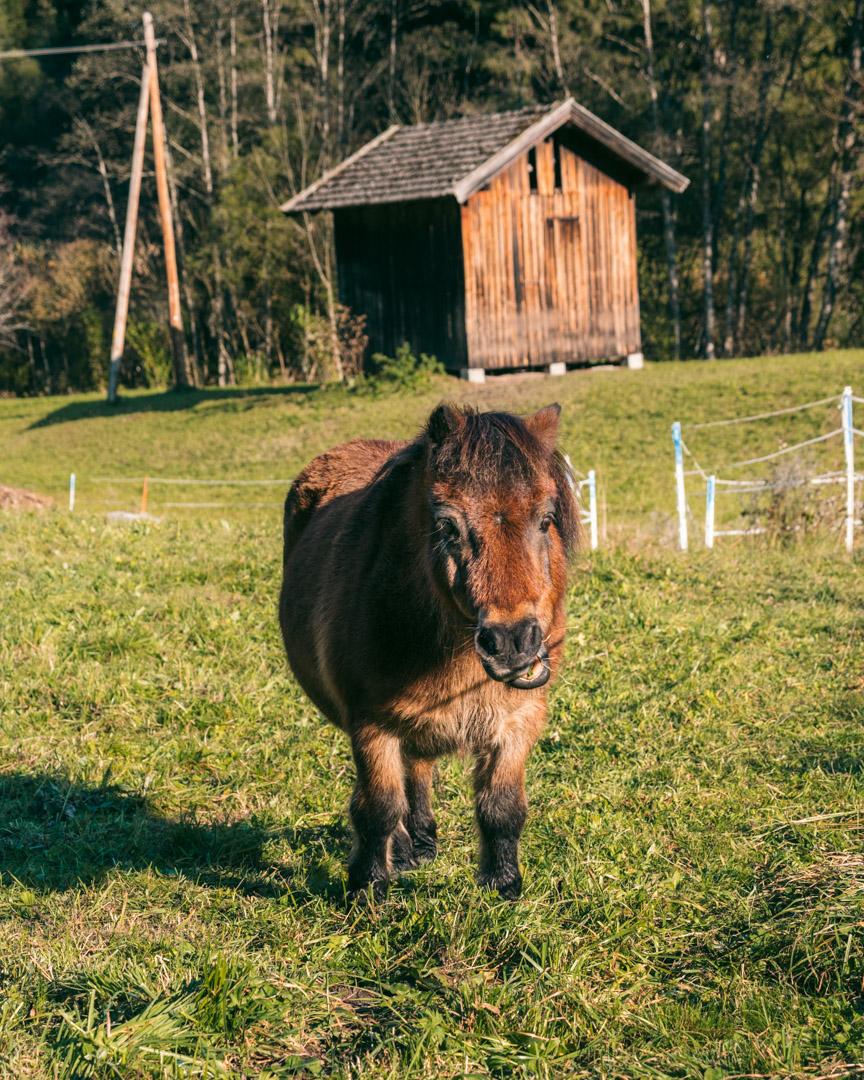 Horse on hike