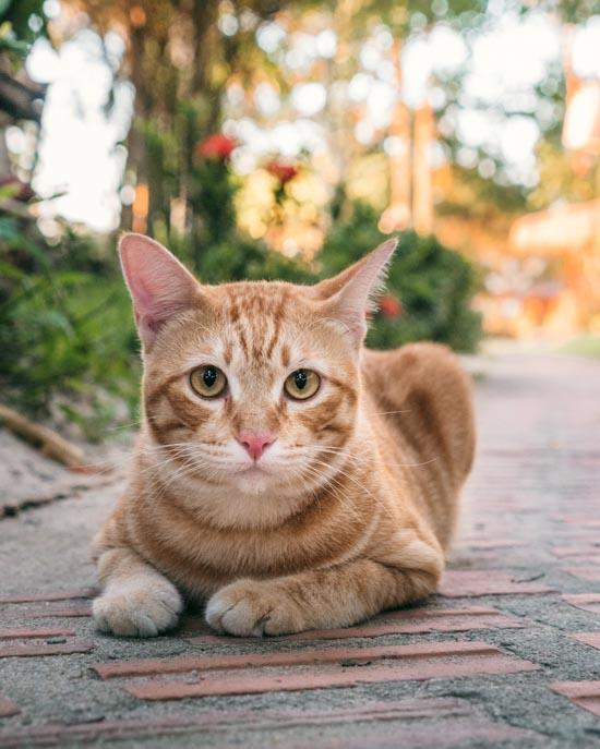 Cat on pathway