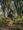 Primus Trail in the jungle
