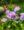 Flowers in Wilder Kaiser