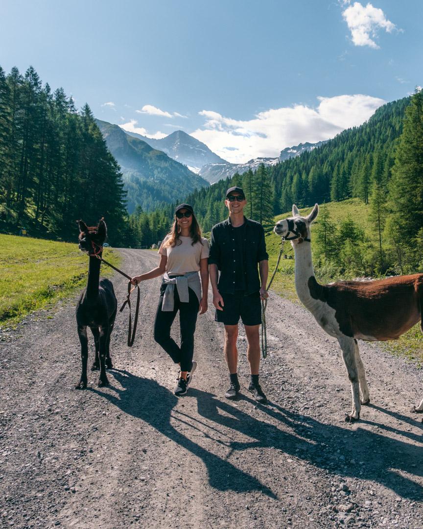 Alpacas in Schmirntal