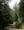 Forest in Schmirntal