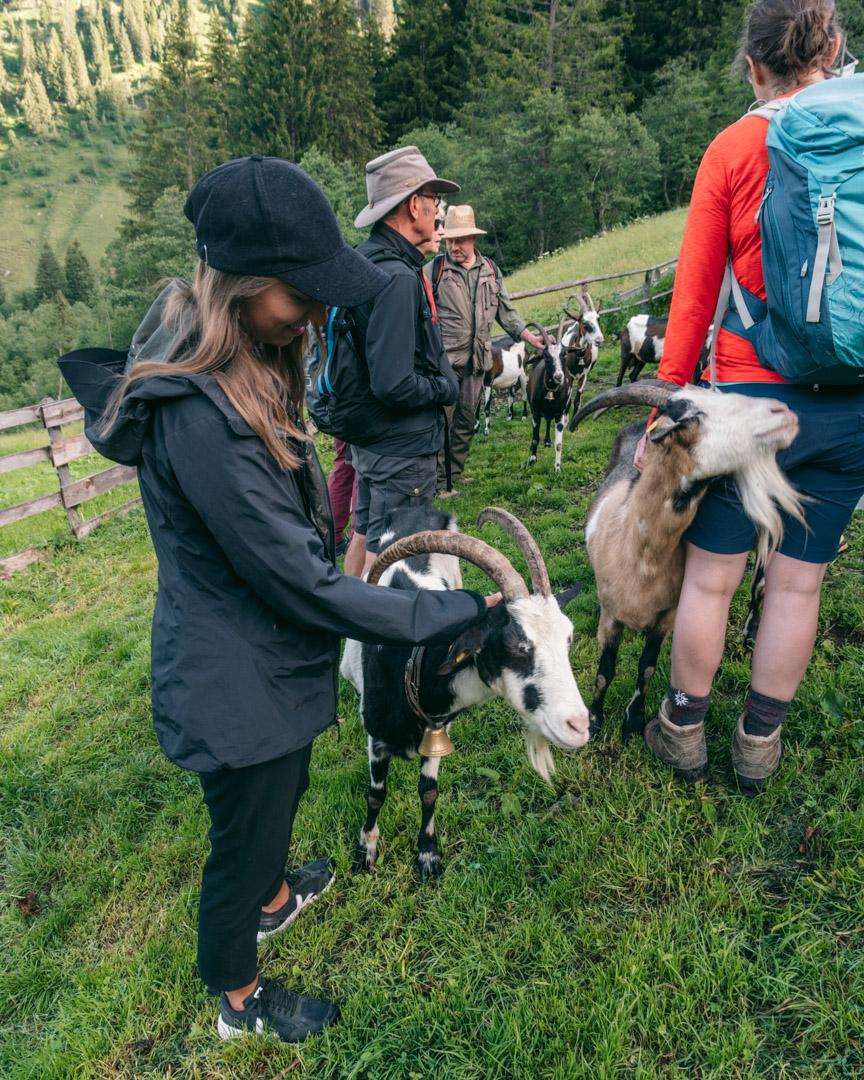 Goat hike start